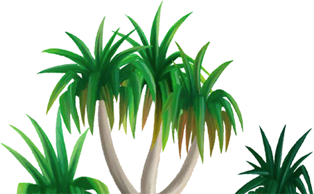 Cartoon drawing of tropical tree.
